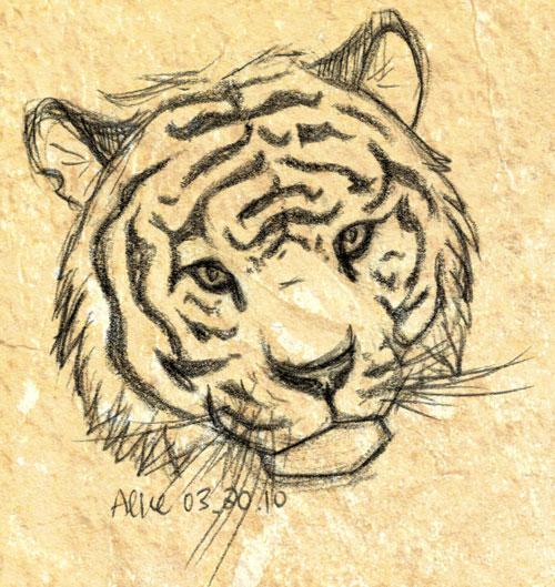 Tiger head drawing - photo#12