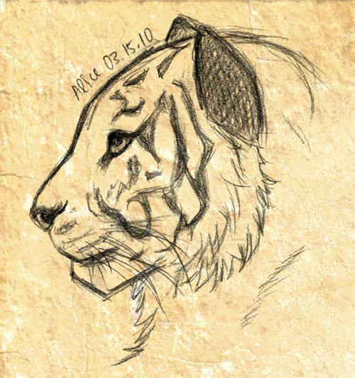 Tiger head drawing - photo#17