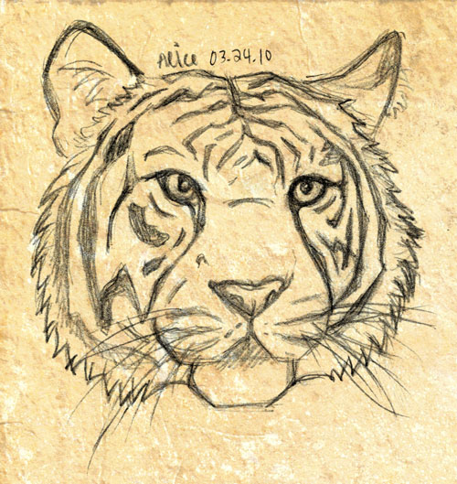 Cool Tiger Head Drawings