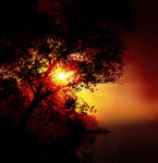 Tree and the Sunset