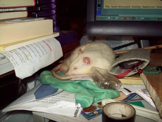 on my desktop by whitehound