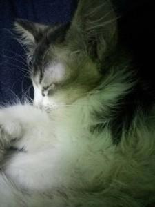 crunchychimul's Profile Picture