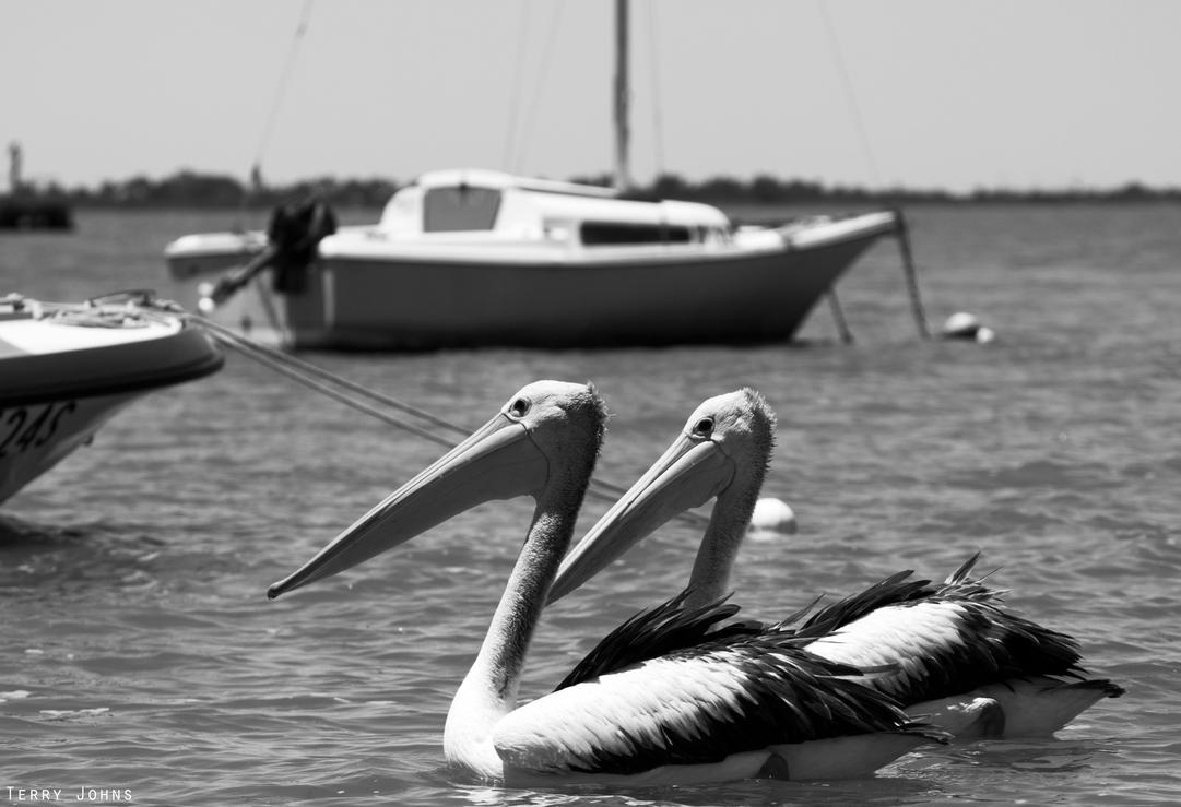 Pelican Duo by SiqueBrand