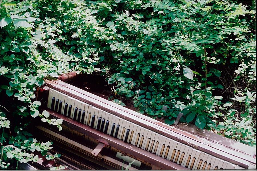 Music Garden By Elevennames On Deviantart