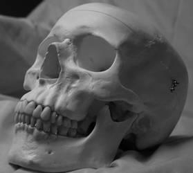 Skull Photo Stock 7 by CcTheMonkey