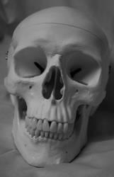 Skull Photo Stock 12 by CcTheMonkey