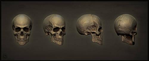 Skull by stalsky