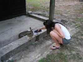 Parched Belizean bunny