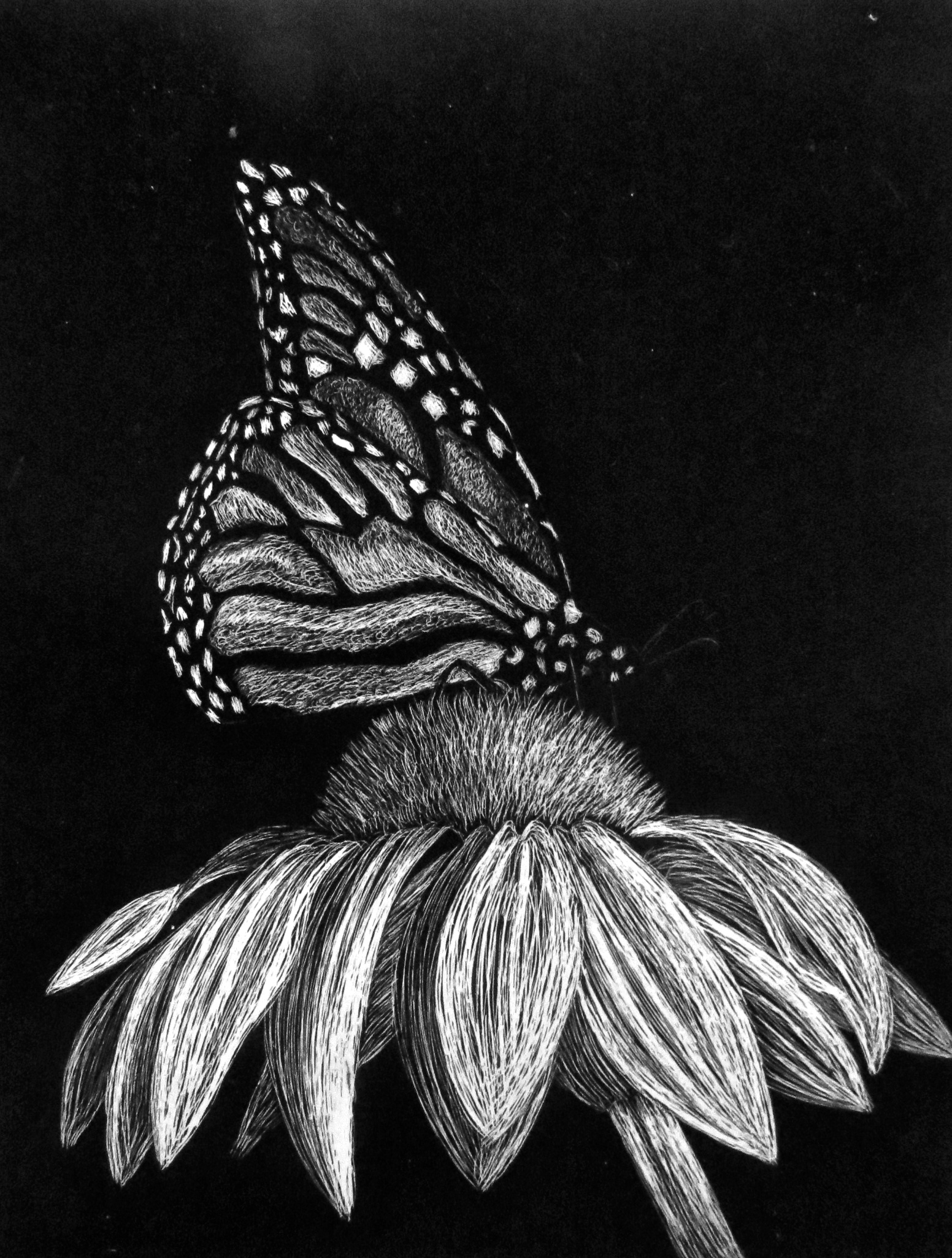 Butterfly scratchboard - photo#9