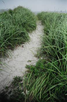 Forgotten Pathway