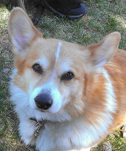 Corgi58's Profile Picture