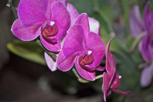 Purple flowers by chalkwebdesign