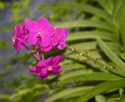 Purple flowers 2 by chalkwebdesign