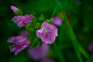 DogWalking - Purple flowers by chalkwebdesign
