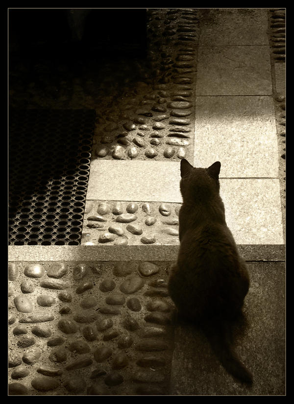Watching, waiting...
