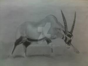 Antelop sketch