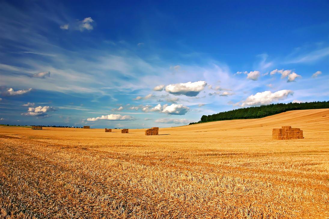 Harvest Wall... Harvest Background