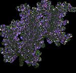 Twins72-Stocks-flowervines-1