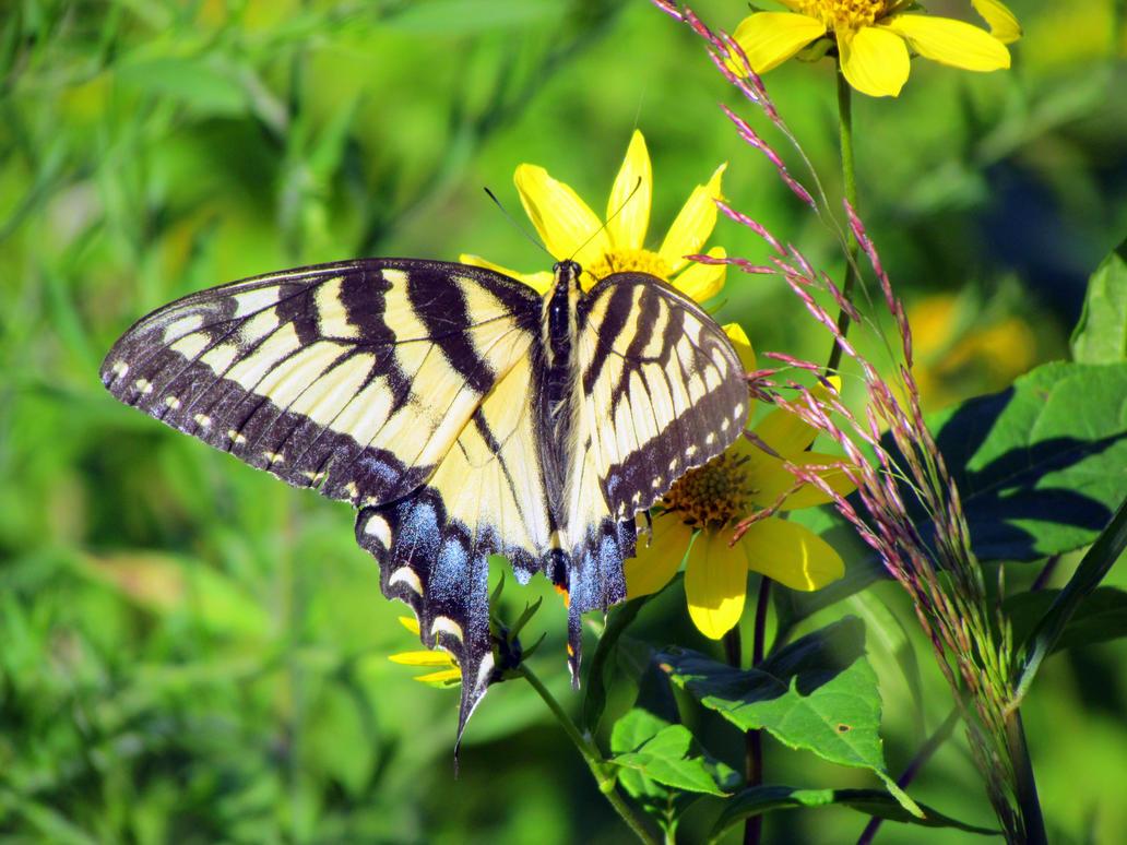 Butterfly Wings by RealityIntolerant