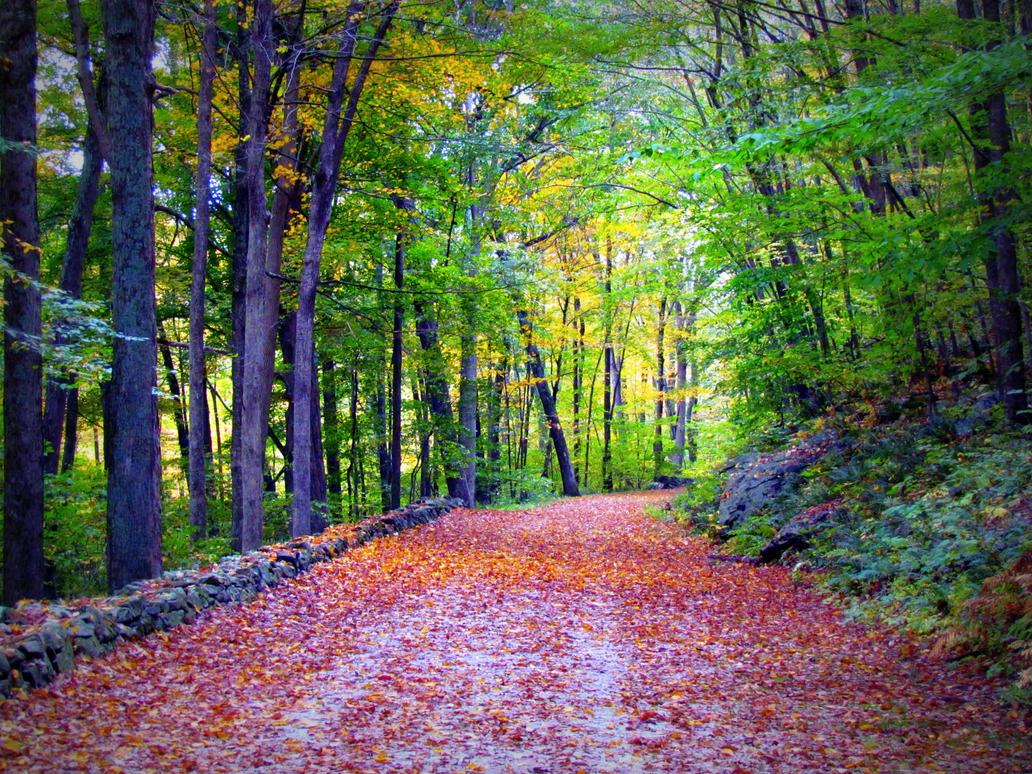 Autumn Path by RealityIntolerant