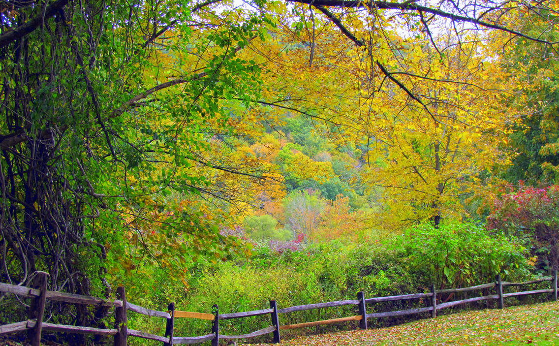 Autumn in Connecticut VI by RealityIntolerant