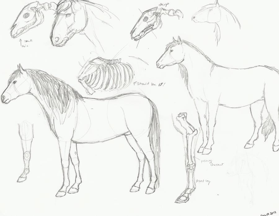 Horse Anatomy Practice by Zoketi on DeviantArt