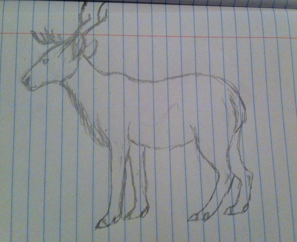 caribou sketch by zoketi