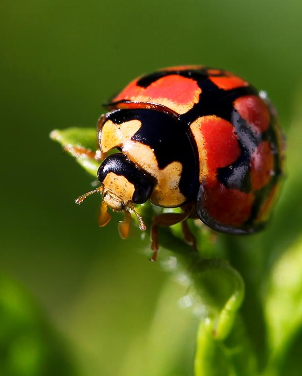 Minty Ladybug by westcoastwitch