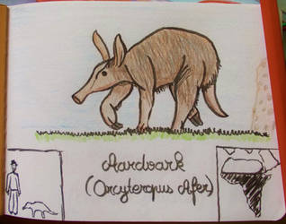 Aardvark - Animal of the Month - June 2014 by MoonyMina