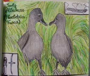 Sooty Albatross - Animal of September 2015 by MoonyMina