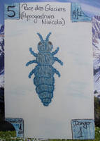 Swiss Nature Book: Snow Flea - Puce des Glaciers by MoonyMina