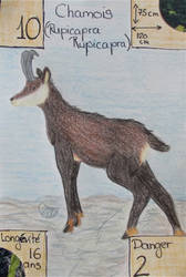 Swiss nature Book: Chamois by MoonyMina