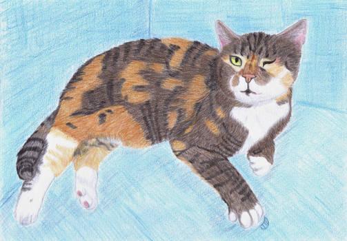 Sasha, Mariann's cat