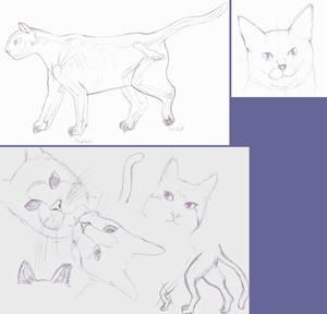 Cat Sketches