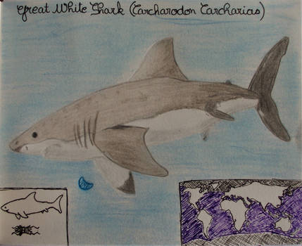 Great White Shark - Animal of March 2020