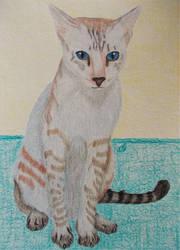 Twix - Cat Portrait for Sabrina