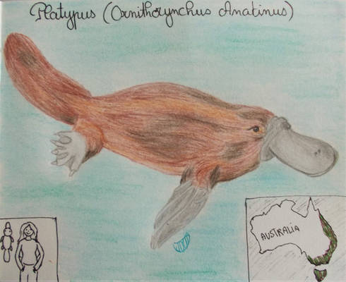 Platypus - Animal of December2020