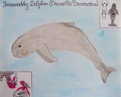Irrawaddy Dolphin - Animal of January 2021