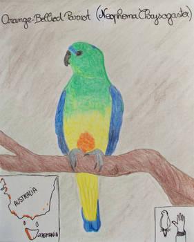 Orange-Bellied Parrot - Animal of April 2021
