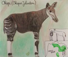 Okapi - Animal of May 2021
