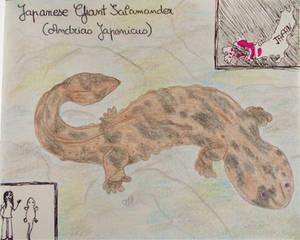 Japanese Giant Salamander - Animal of June 2021