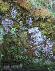 Moss Gnome - Pareidolia
