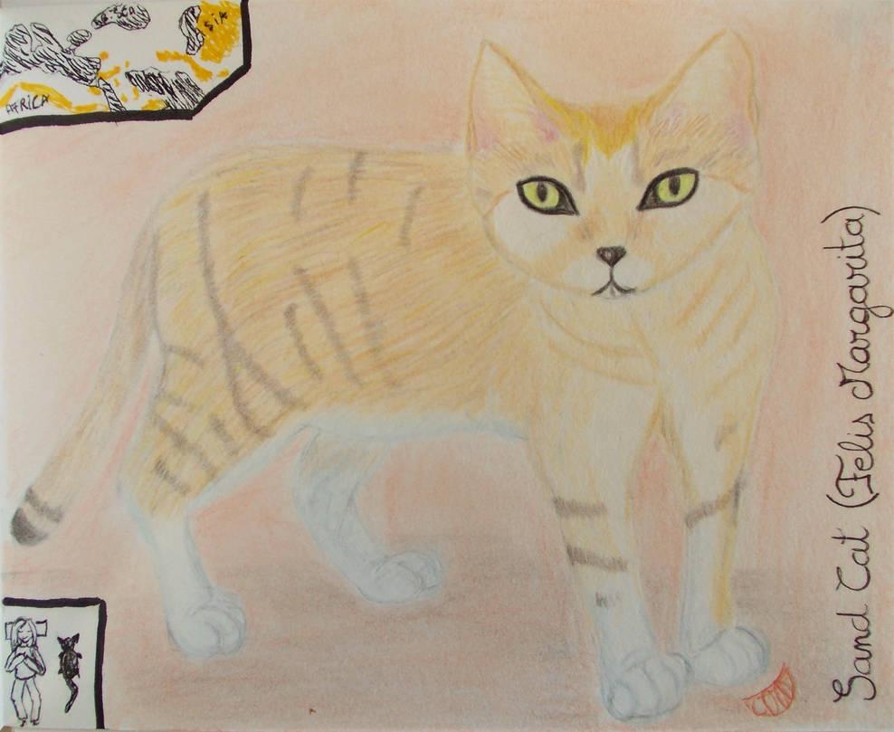 Sand Cat - Animal of September 2021