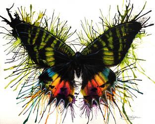 Sunset Moth by LuxDani