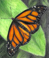 Monarch Butterfly by LuxDani
