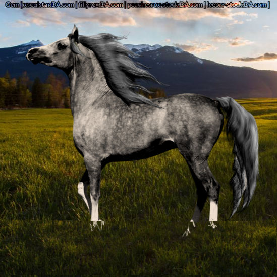 Dapple Grey Horse Avatar