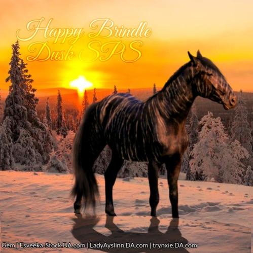 Snowy Brindle Horse