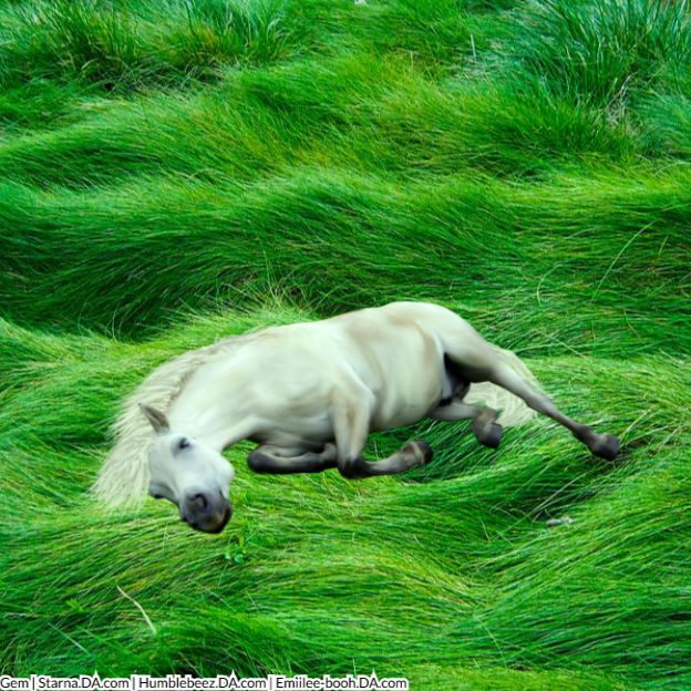 Sleepy Pony
