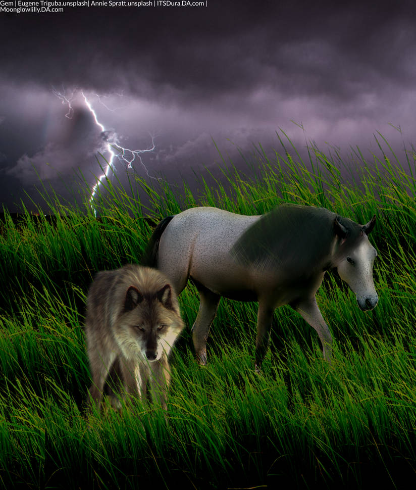 Horse and Wolf Avatar