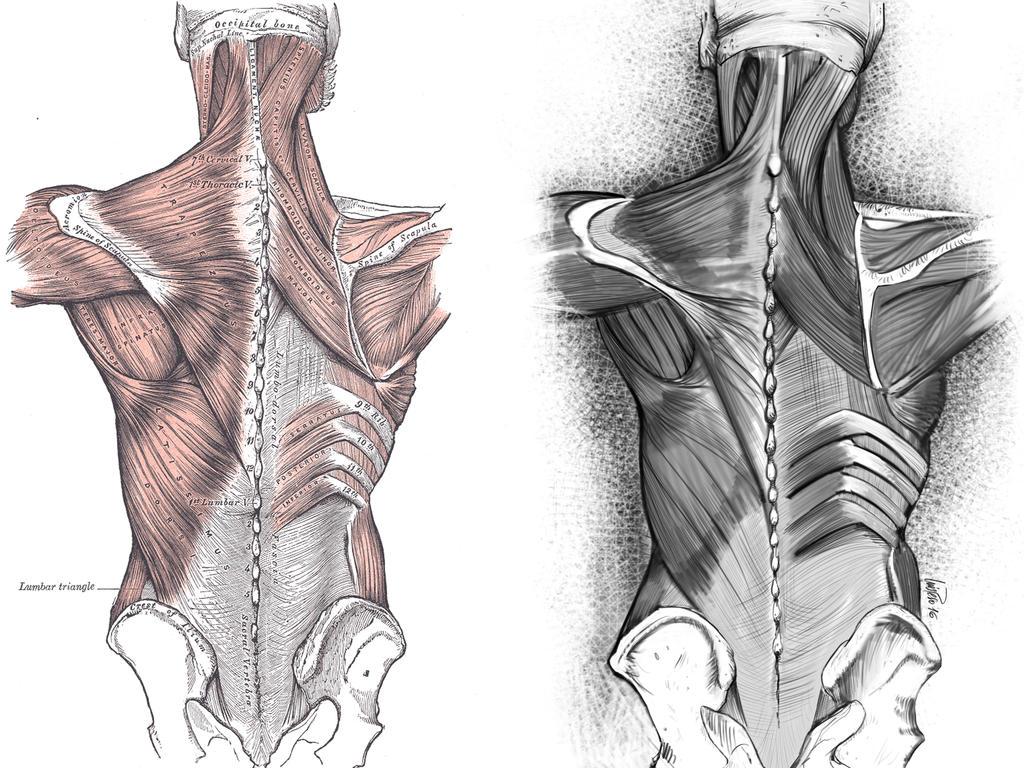 Anatomy#1 by nuevemonos